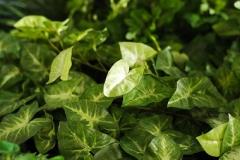 chouchou_green_tate